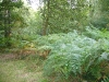 Forest-Ardennes-1