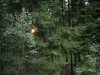 Forest-Ardennes-8