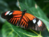 The museum of butterflies, Toronto, Canada, Butterfly_1